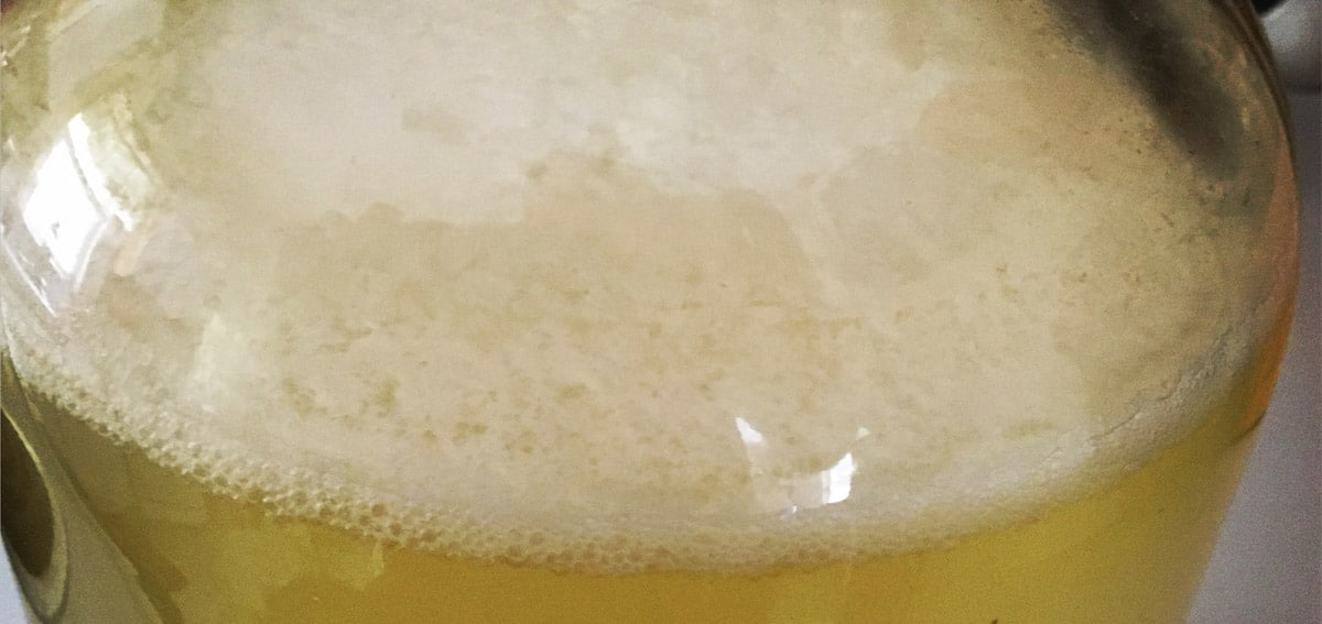 lactobacillus plantarum in mead